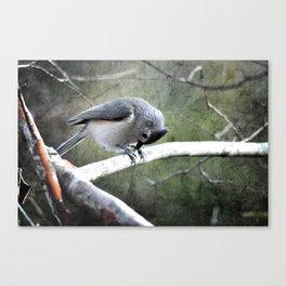 Tufted Titmouse Canvas Print