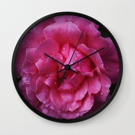 macro water drops on pink rose Wall Clock