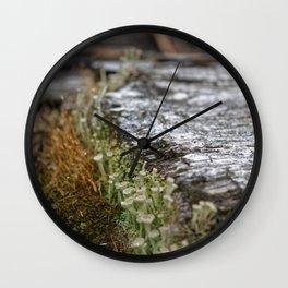 Decay = Regrowth Wall Clock