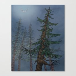 Forest Moonlight Canvas Print