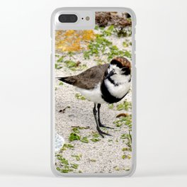 Two Ring Plover Clear iPhone Case