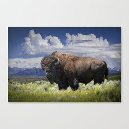 American Buffalo Bison by Yellowstone National Park in Montana Canvas Print