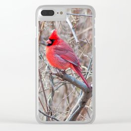 Male Cardinal Clear iPhone Case