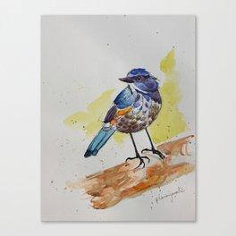 Himalayan Bluetail Bird- in watercolor Canvas Print