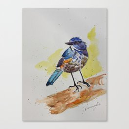 Himalayan Bluetail Bird- in watercolor Canvas Print