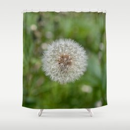 Shower head, infruttescence of the dandelion flower Shower Curtain