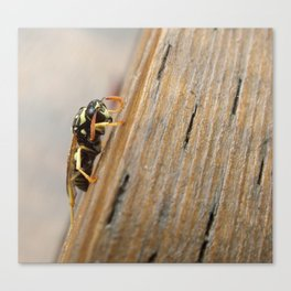 Depressed Wasp Canvas Print