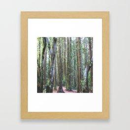 Moss & Redwoods Framed Art Print