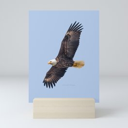 May Soaring Eagle Mini Art Print