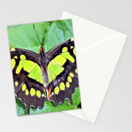 Overdose Of Green Stationery Cards