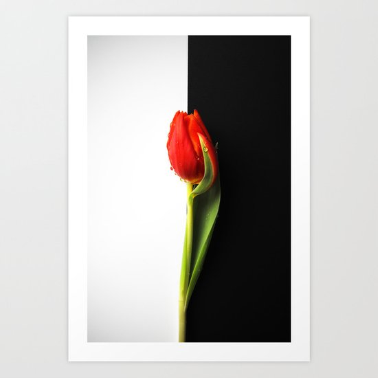 Black and White and Red Tulip Art Print