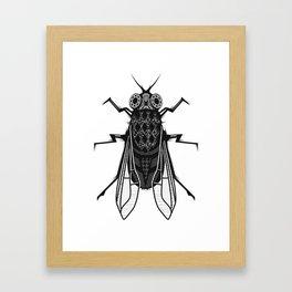 A housefly Framed Art Print