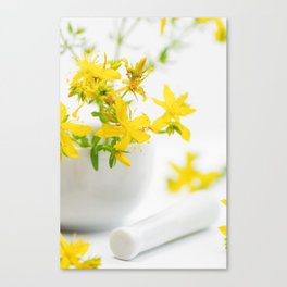 St. John's wort the strong helper from nature Canvas Print