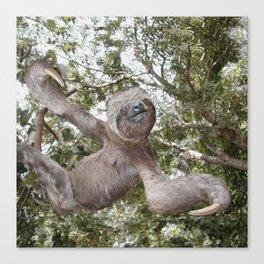 Sloth, A Real Tree Hugger Canvas Print