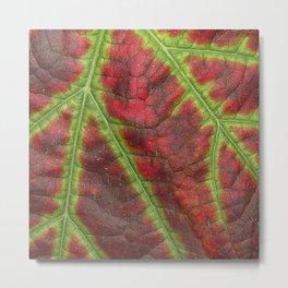 Vine leaf details Metal Print