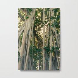 Banyan Tree - Tropical Decor Metal Print