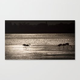 Backlit Flamingos Canvas Print