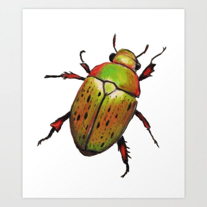 Christmas Beetle.Australian Christmas Beetle Anoplognathus Suturalis Art Print By Mcbiteypants