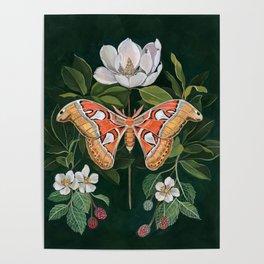 Atlas Moth Magnolia Poster
