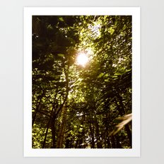 Summershine Art Print