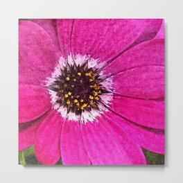 Pink African Daisy Flower Floral Painting Metal Print