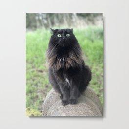 Duchess Surprised Metal Print