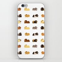 pigs iPhone & iPod Skins featuring Guinea pigs by stephasocks