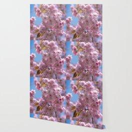 Cheery Blossom Wallpaper