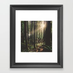 Sun in the Rainforest Framed Art Print