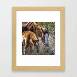 Wild Foal with Dad Framed Art Print