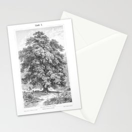 Linden Tree Print from 1800's Encyclopedia Stationery Cards