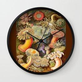 Haeckel Illustration - Marine Life Wall Clock