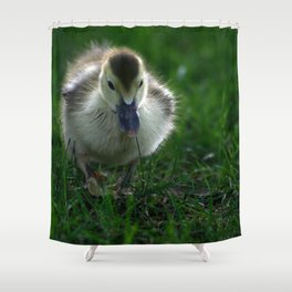 Cute Duckling Walking on a Lawn Shower Curtain