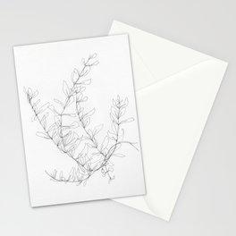 Neri Olive Branch Stationery Cards