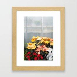 The Poinsettias  //  Euphorbia Pulcherrima Framed Art Print