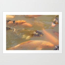 Carp fish Art Print