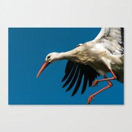 white stork landing on nest Canvas Print