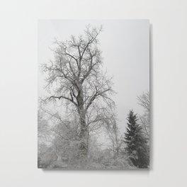 Misty Winter Metal Print