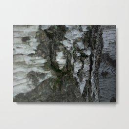 Beech tree trunk Metal Print