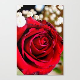 Zoomed in Rose Canvas Print