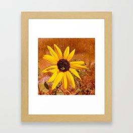 Bees in the sun Framed Art Print