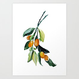 Kumquat may Art Print