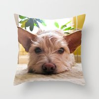 custom Throw Pillows featuring Custom Order by Canis Picta
