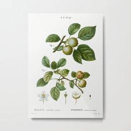 European crabapple, Malus communis sylvestris from Traité des Arbres et Arbustes que l'on cultive en Metal Print