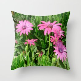 Magenta Africa Daisies Throw Pillow
