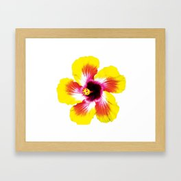 Hibiscus in Yellow Framed Art Print