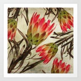 Vintage Repens Proteas Kunstdrucke