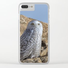Snowy Owl with a strange look Clear iPhone Case