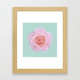 rose by another name: pink ghost on eau de nil Framed Art Print
