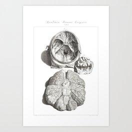 Human Anatomy Art Print CEREBELLUM CERVICAL SPINE Vintage Anatomy, doctor medical art, Antique Book Art Print
